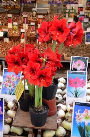 Mercat de les flors . AMSTERDAM - HOLANDA