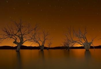 Arboles muertos- nocturna