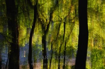Lluvia Solar – Santa Fe, Parque Natural del Montseny, Catalunya. Edición: 10/10 + 2P/A