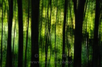 Lluvia Insonora – Santa Fe, Parque Natural del Montseny, Catalunya. Edición: 10/10 + 2P/A