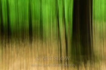 Ecosistema Integrado - Parque Nacional Hoge Veluwe, Holanda. Edición: 10/10 + 2P/A