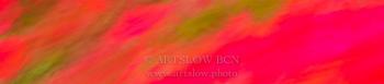 Bcn rosas fucsias; Ref: 1604-0859