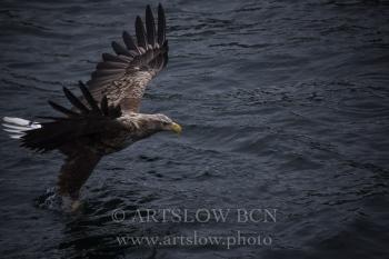 La Reina del Fiordo- Islas Lofoten - Noruega. Edición: 10/10 + 2P/A