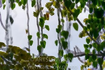 202-8469-Ramillete de Corazones,lago Gatún, Panamá