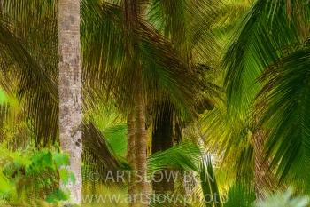 2002-9266-Cocoteros2, Bocas del Toro,Isla de Colón, Panamá