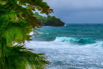 2002-9394-Natura Tropical e Imaginación 3, Bocas del Toro,Isla de Colón, Panamá