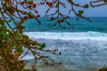 2002-9404-Natura Tropical e Imaginación 4, Bocas del Toro,Isla de Colón, Panamá