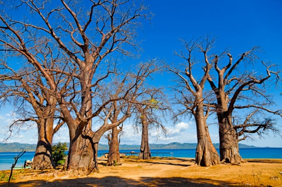 baobabs Isla de Likoma- Lago Nyassa