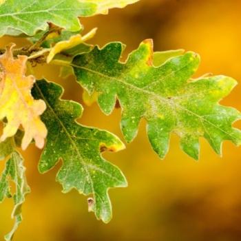 Moncayo autumn