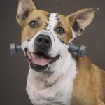 Pide tu Calendario DogCity