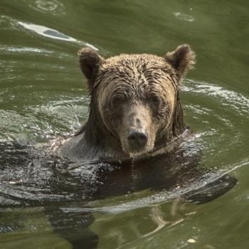 Bears,Bears and more Bears