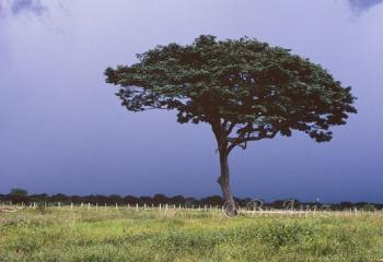 Tormenta en Los Llanos - Venezuela