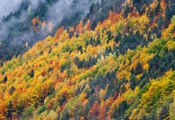 Bosque otoñal en Pineta.