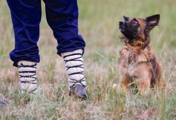 Mirada de nobleza y obediencia al pastor