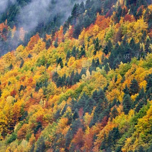 Otoño en el Pirineo