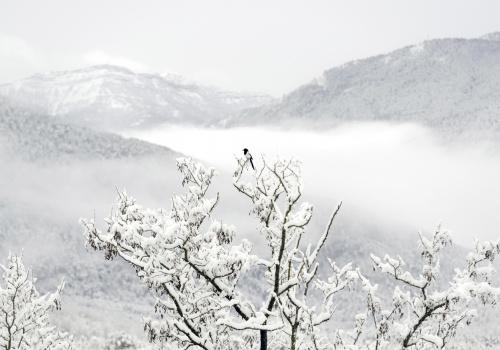 Aragón salvaje - Del valle a la montaña