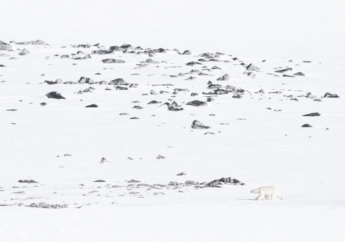 Nanook - Una historia del ártico