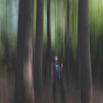 Hallucinogenic forest
