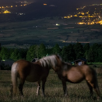 Horses in love under the moonlight
