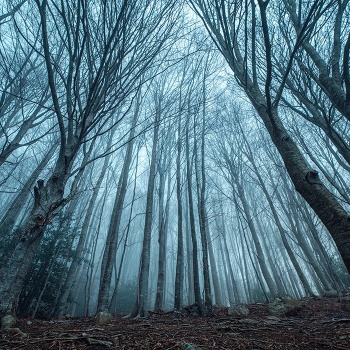 Akana's Forest