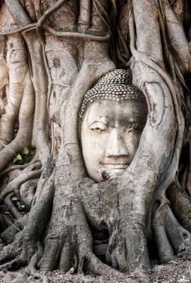 Wat Mahathat | Thai Frames | Dani Vottero