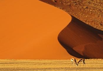 Esencia del Namib