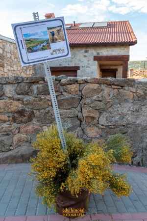 Decoración San Martín de la Vega foto 1