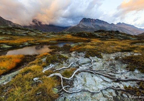 alpes, francia, france, raices, roots, naturaleza, esteve garriga