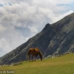High mountain pastures