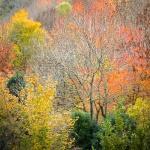 Más otoño más colores