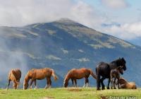 Pastures d'estiu