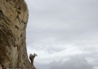 Balance - Pyrenees