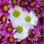 Arreglos florales boda en Hotel Rural Maipez