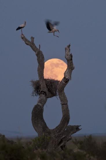 Incubar la luna