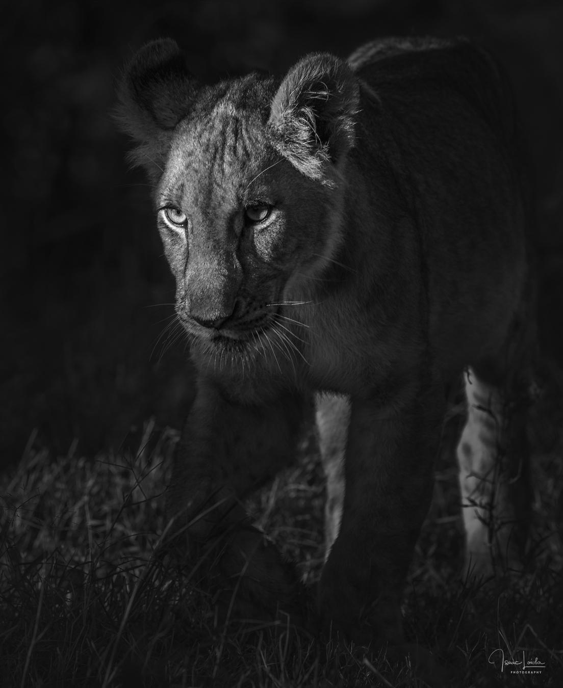 Leones - Isaac Loiola, Photography
