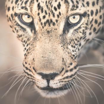 Simbavati - Sudáfrica