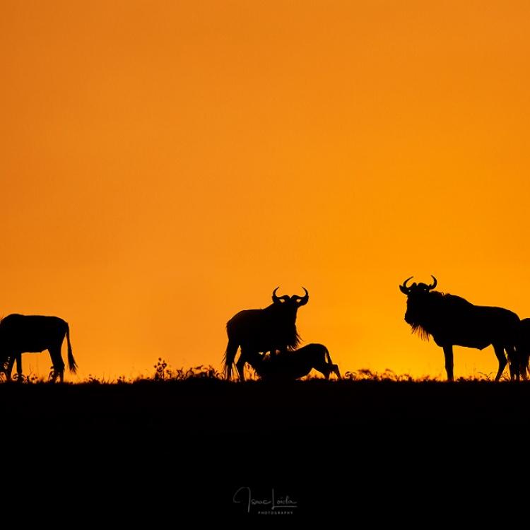African sunrise - Masai Mara