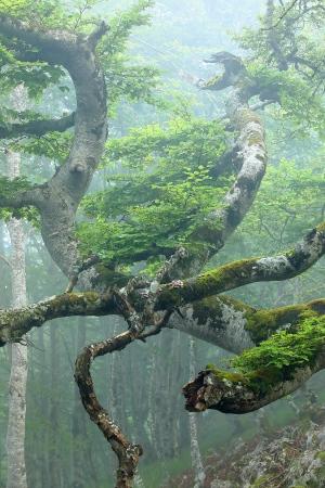 Bosque en Aralar, Navarra, Iñaki Bolumburu