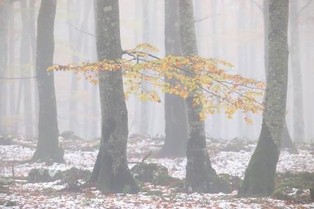 Bosque con niebla-Urbasa-otoño-Iñaki Bolumburu