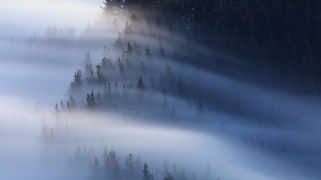 niebla, mar de nubes, iñaki bolumburu, fotografía