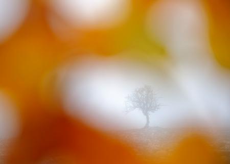 Árbol solitario aralar navarra otoño Iñaki Bolumburu