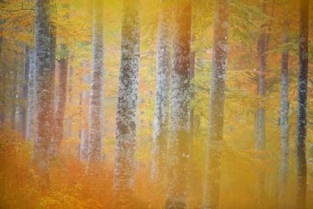 Árbol otoño aralar navarra fotografía Iñaki Bolumburu