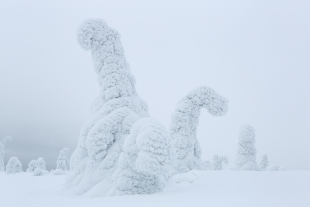 Dinos, Riisitunturi, Finlandia, Febrero 2013.