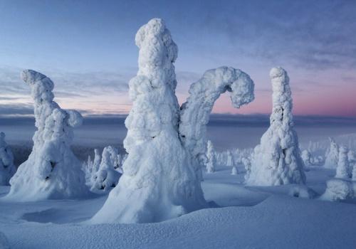 Frost, Riisitunturi, Finland, February 2013.