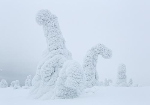 Dinosaurs, Riisitunturi, Finland, February 2013.