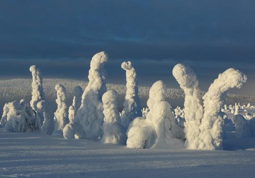 The taiga, Riisitunturi, Finland, February 2013.