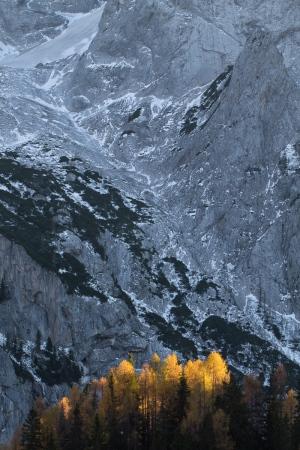 Alerces en otoño. Dolomitas italianos