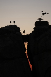 Finalist in the 2013 Montphoto-AEFONA International Nature Photography Competition