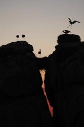 Finalista Concurso Internacional de Fotografía de la Naturaleza Montphoto-AEFONA 2013