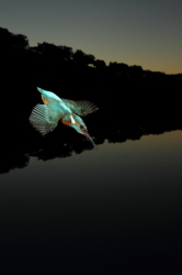 Finalist XXIX Photo Contest World Environment Day Junta Andalucia 2012